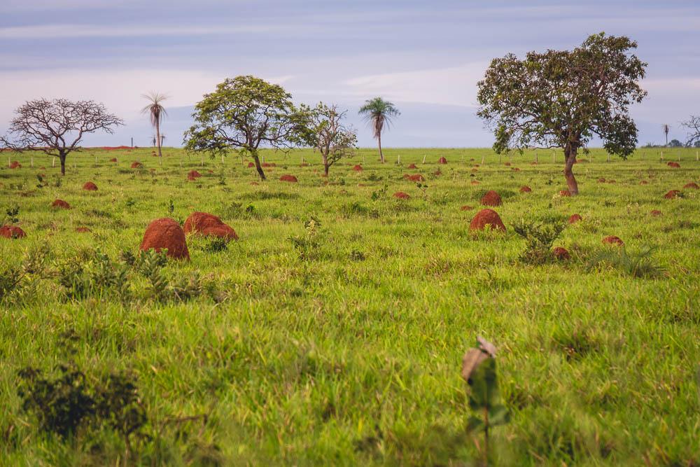 Breakdown wild animals Brazil anthill