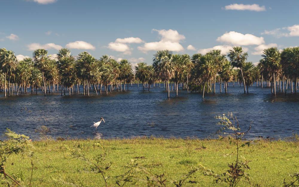rohayhu paraguay flooding