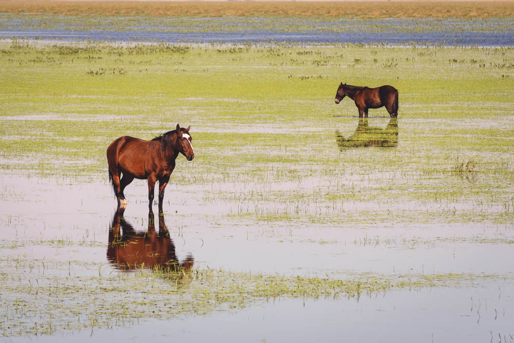 rohayhu paraguay flood horse